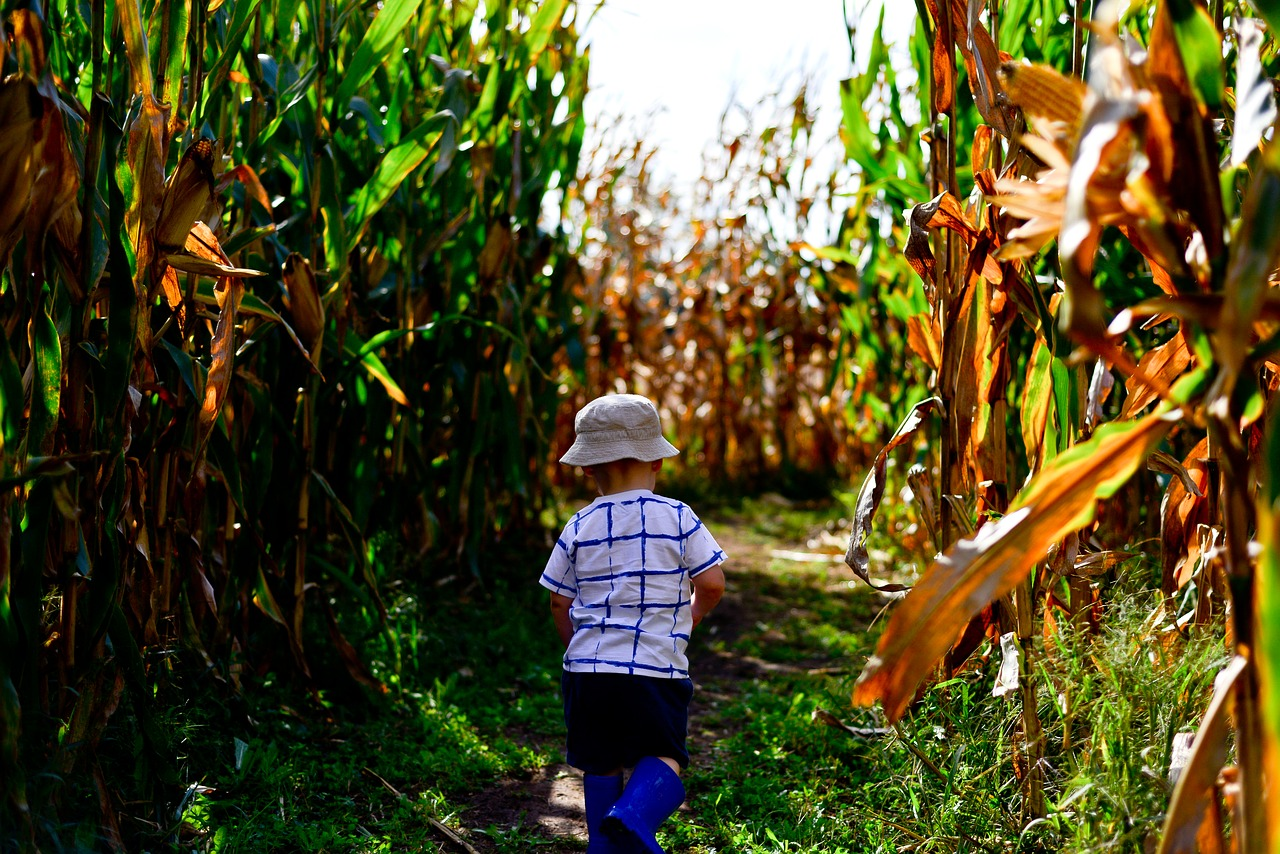 kid running through a corn maze